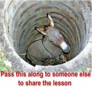 Farmer's Donkey